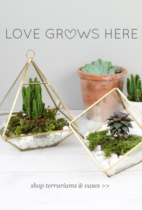 Love grows here - shop terrariums and vases >>