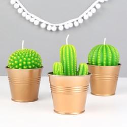 Temerity Jones Cactus Candle