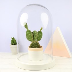 Extra Large Glass Bell Jar Dome with White Ceramic Base