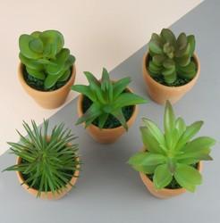 Temerity Jones Artificial Succulent Potted Plant